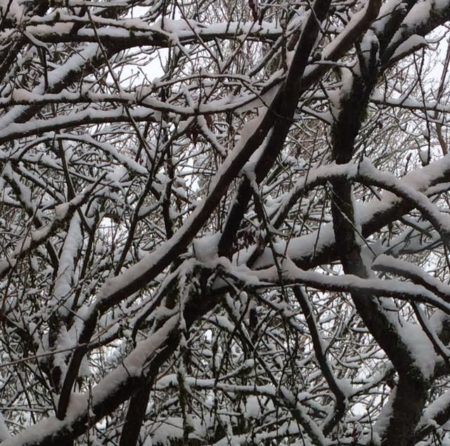winter Feb 4